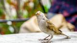 Замърсяването, врабчетата, градските птици и как им влияе мръсният въздух