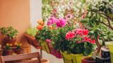 Цветята, с които да преобразим терасата