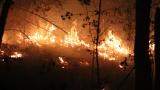 Хиляди са евакуирани заради огромен горски пожар в Испания