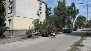 """Опасни дървета в столичния район """"Оборище"""""""