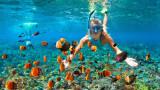 Какво е общото между коралите и слънцезащитните продукти