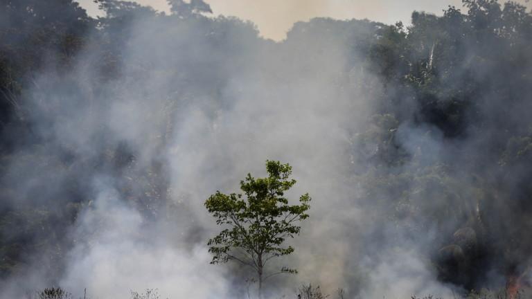 Пожарите в Амазонка са най-сериозните за последните 10 години