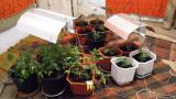 Полицаи от Белоградчик разкриха лаборатория за канабис