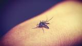 Повишен риск от малария в Гърция