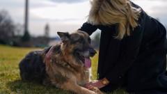 Почина Чемп, кучето на семейство Байдън