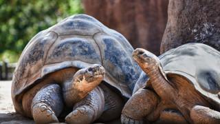 Колко са умни гигантските костенурки