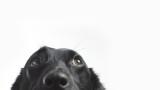Най-подходящите породи кучета за апартамент