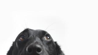 Куче в чекмедже