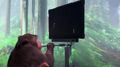 Чипираната маймуна на Neuralink, която играе игри с ума си