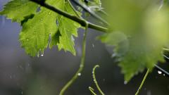 Жълт код за обилни валежи и градушки в 9 области