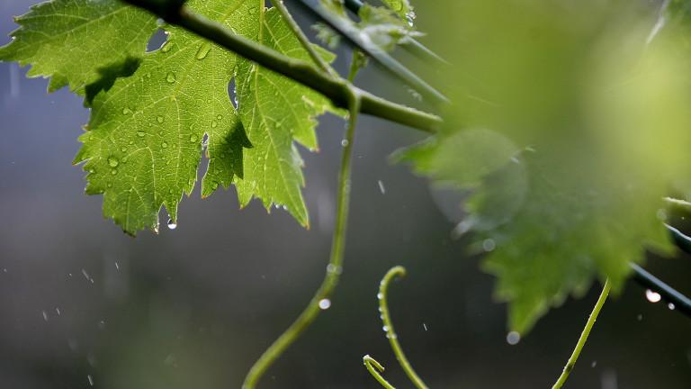 Дъждовно с условия за градушки