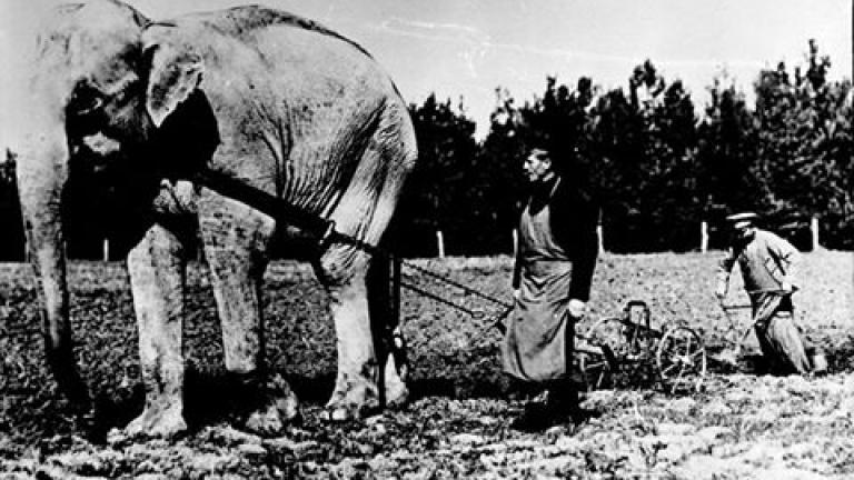 Тъжната история на слоновете Наал и Диаманди в София (СНИМКИ)