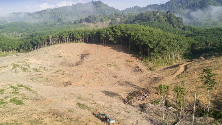 Обезлесяването е унищожило 8% от Амазонската джунгла за 18 години