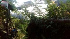 Откриха домашна наркооранжерия в Пазарджишко