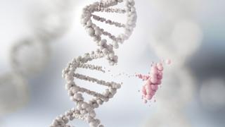 Учени установиха, че тежката форма на COVID-19 e генетично обусловена