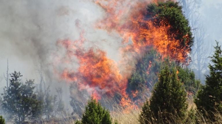 409 пожара са гасени в страната само за ден. Това