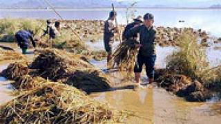 $7,5 милиона отделя Сеул за наводненията в КНДР