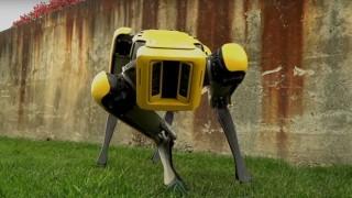 Роботите, които стреснаха интернет