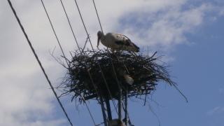 Още 167 щъркелови гнезда обезопаси ЧЕЗ