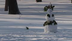 15 януари - Световен ден на снега