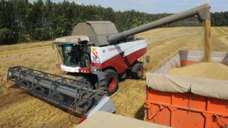 България е сред 6-те  най-големи износители на зърно в ЕС