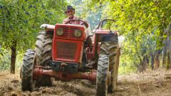 Румънските фермери са в паника заради африканската чума по свинете