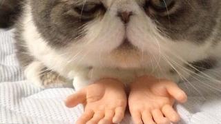 Котка с човешки протези взриви интернет (СНИМКИ)