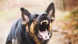 Бездомно куче нахапа млада жена в Дупница