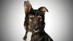 Кучета участват във фотоизложба в центъра на столицата