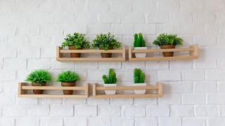 Кога изкуствените растения са добра идея