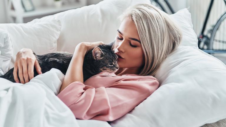 Какъвто стопанинът, такава и котката