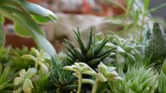 """""""Коледна разходка с дъх на Аризона"""" в ботаническата градина в Балчик"""