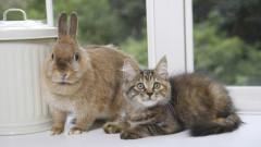 Русия тества ваксина COVID-19 за домашни животни