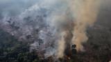 Международни адвокати изготвят план за криминализиране унищожаването на природата