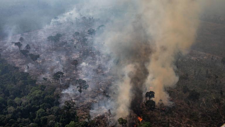 Звездите сигурно са изгорели - бездействието на известните към Амазонската джунгла