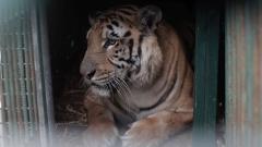 Закриха ужасяващия зоопарк в Ивицата Газа