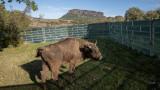 Източните Родопи стават дом на още два зубъра
