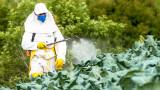 Как изкуствен подсладител може да послужи за инсектицид