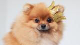 Най-богатите кучета в света
