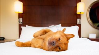 Ето защо хотелските легла са толкова удобни