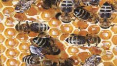 Откриват изложение по пчеларство в Плевен