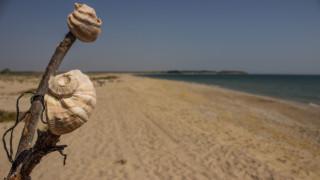"""Проверката на плаж """"Корал"""" не показва нарушения"""