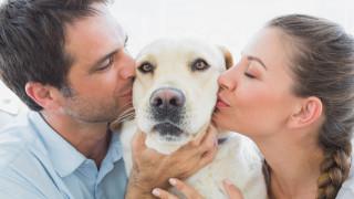 Когато изглежда, че обичаме кучето си повече от партньора си