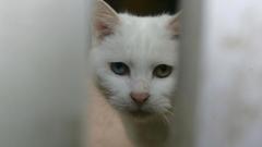 Полицията разследва случай на агресия срещу бездомна котка в Радомир