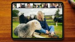Медитация с овце и разходка с кучетата в Чернобил