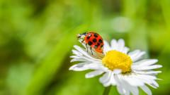 Резкият спад на броя на насекомите заплашва да доведе до срив на природата