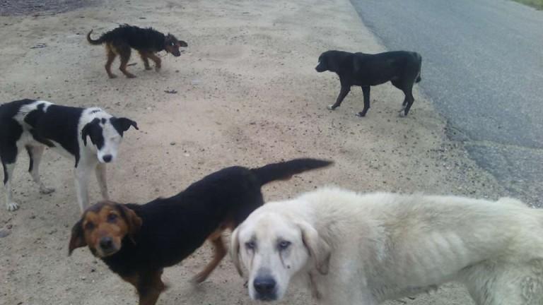 Община Павликени решава проблема с бездомните кучета със заем