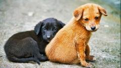 Днес е Световен ден на бездомните животни