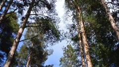 Варненци на пореден протест срещу изсичането на гората на Коджа тепе
