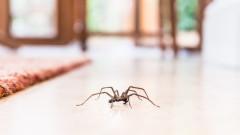 Как да предпазим дома си от паяци през есента